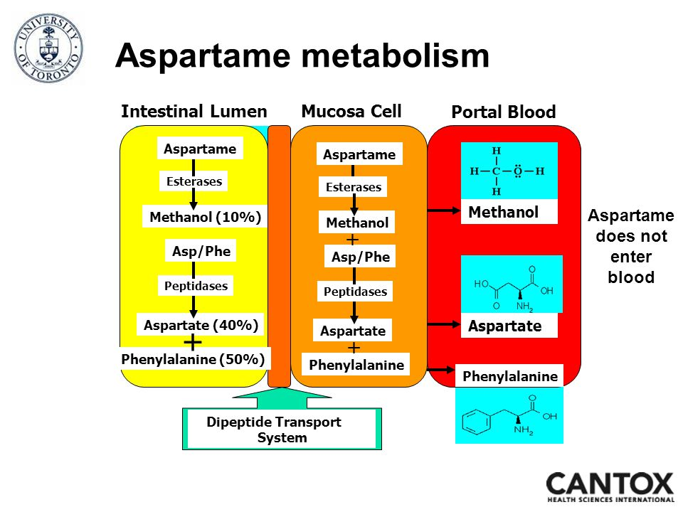 Intestinal LumenMucosa Cell Methanol Aspartate Phenylalanine Aspartame Portal Blood Aspartame Esterases Methanol (10%) Asp/Phe Aspartate (40%) Phenylalanine (50%) Peptidases + Dipeptide Transport System Aspartame Esterases Methanol Asp/Phe Aspartate Phenylalanine Peptidases + + Aspartame metabolism Aspartame does not enter blood
