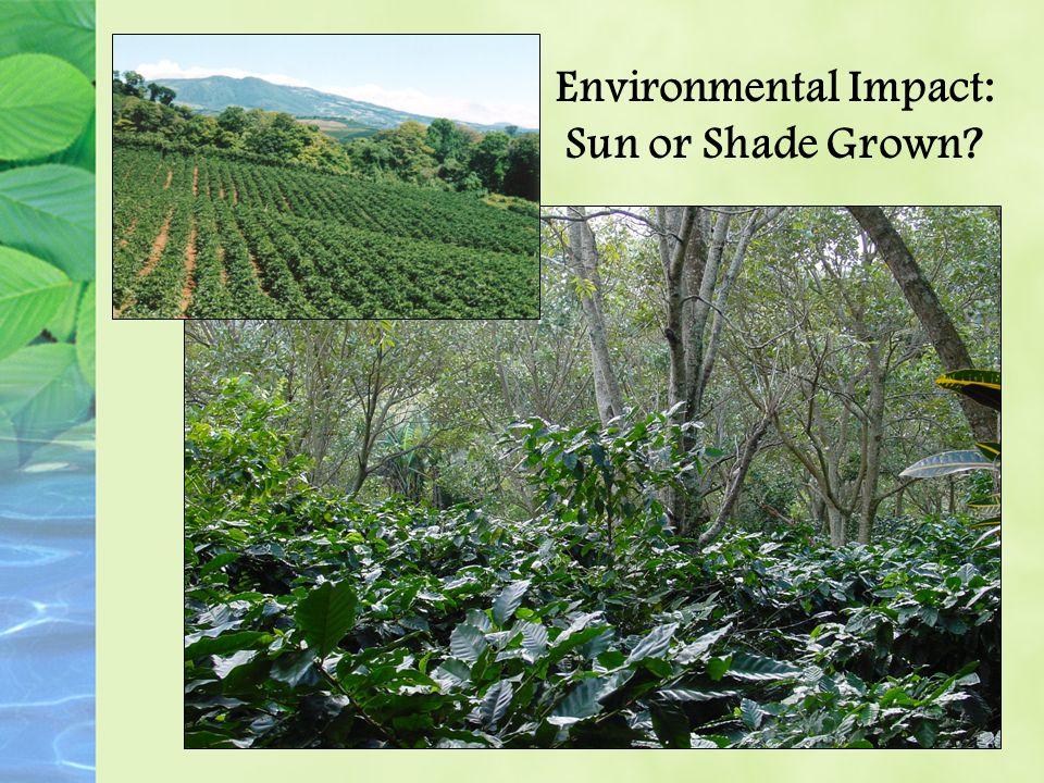 Environmental Impact: Sun or Shade Grown