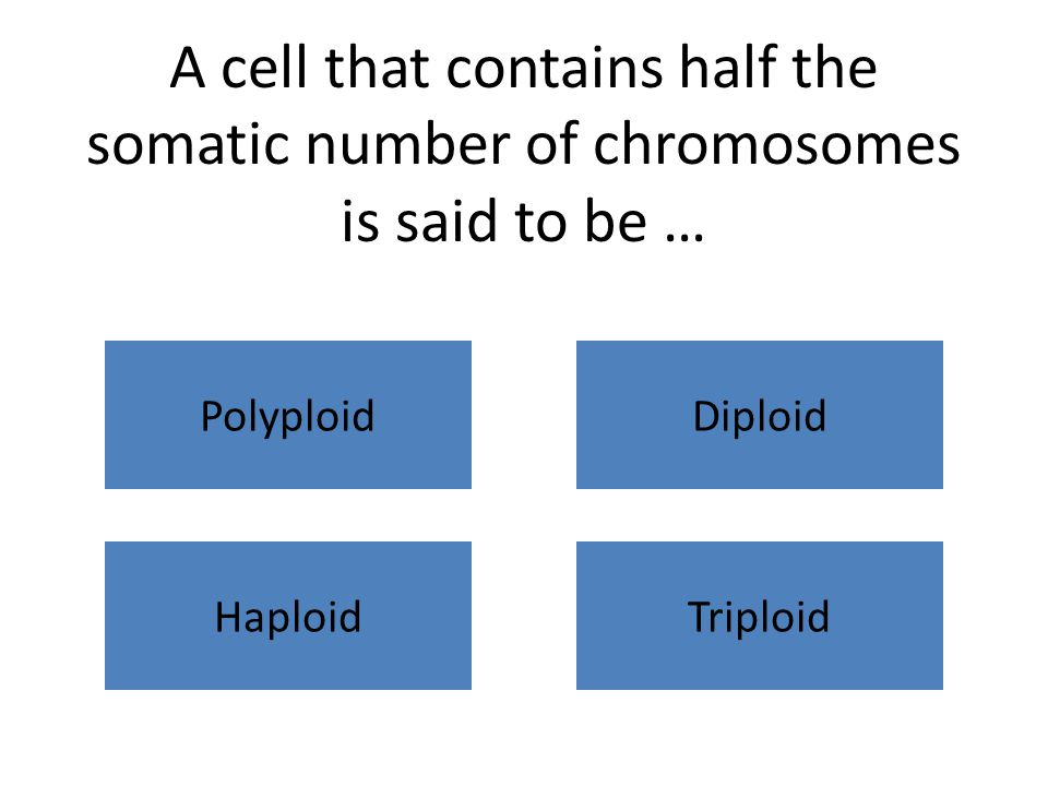 A cell that contains half the somatic number of chromosomes is said to be … PolyploidDiploid HaploidTriploid