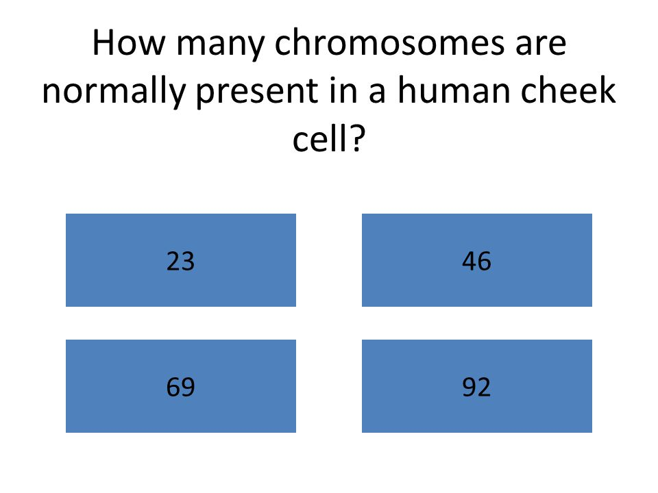 How many chromosomes are normally present in a human cheek cell? 2346 6992
