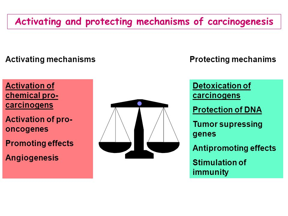 Activating mechanismsProtecting mechanims Activation of chemical pro- carcinogens Activation of pro- oncogenes Promoting effects Angiogenesis Detoxica