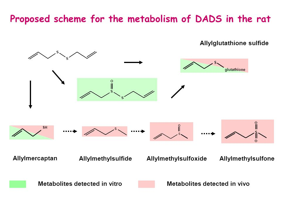 Proposed scheme for the metabolism of DADS in the rat AllylmethylsulfideAllylmethylsulfoxideAllylmethylsulfone Allylmercaptan Allylglutathione sulfide