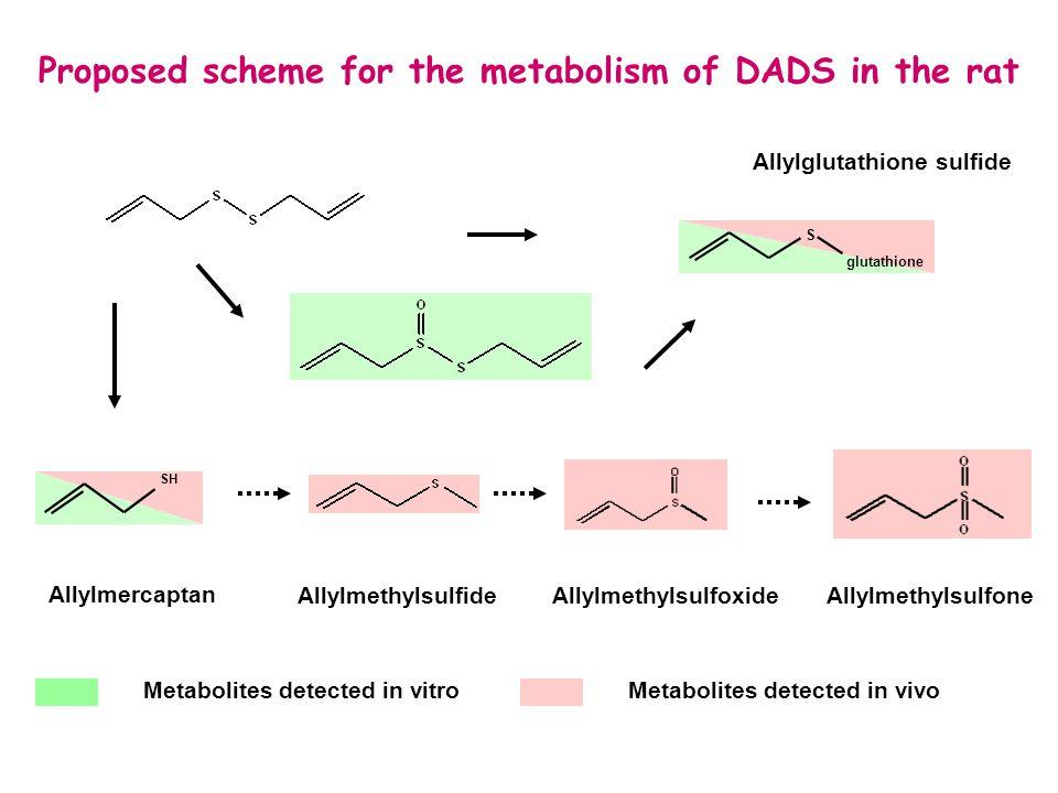 Effects of garlic on carcinogen metabolizing enzymes RESULTS Treatments S0 S200 S400 CYP 1A -  CYP 2B - CYP 3A - GST  UGT  GST : glutathione transferase UGT : UDP-glucuronosyltransferase CYP : cytochrome P450