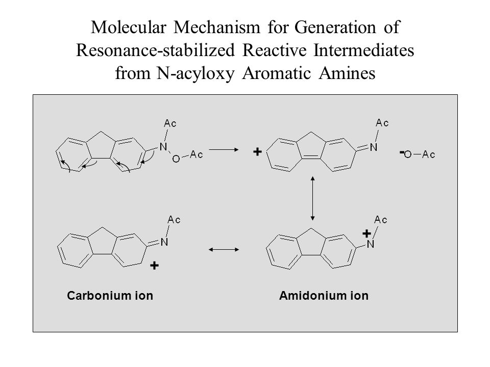 Molecular Mechanism for Generation of Resonance-stabilized Reactive Intermediates from N-acyloxy Aromatic Amines Carbonium ionAmidonium ion + - + +
