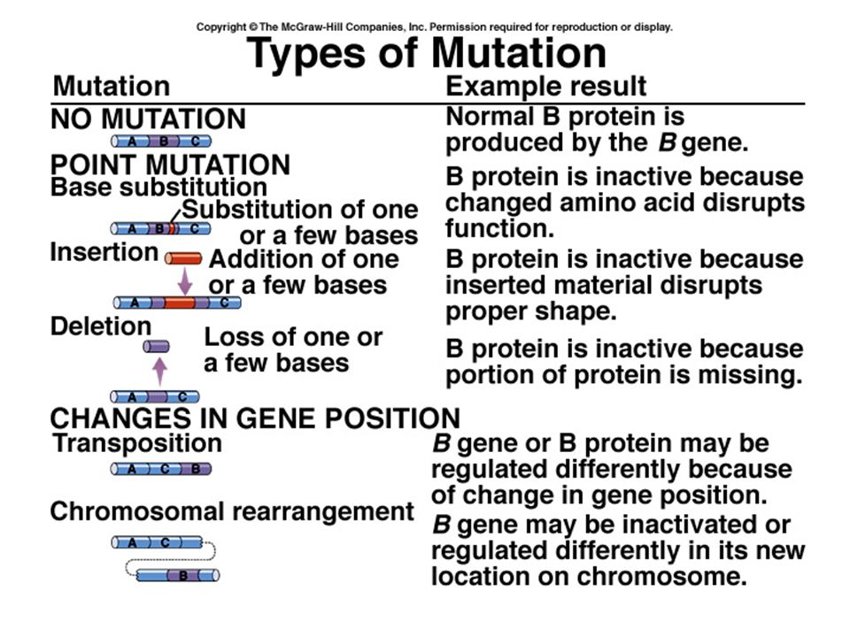 Mutations in tumor-suppressor genes Tumor-suppressor genes are responsible for blocking cell division ('Simon didn't say').