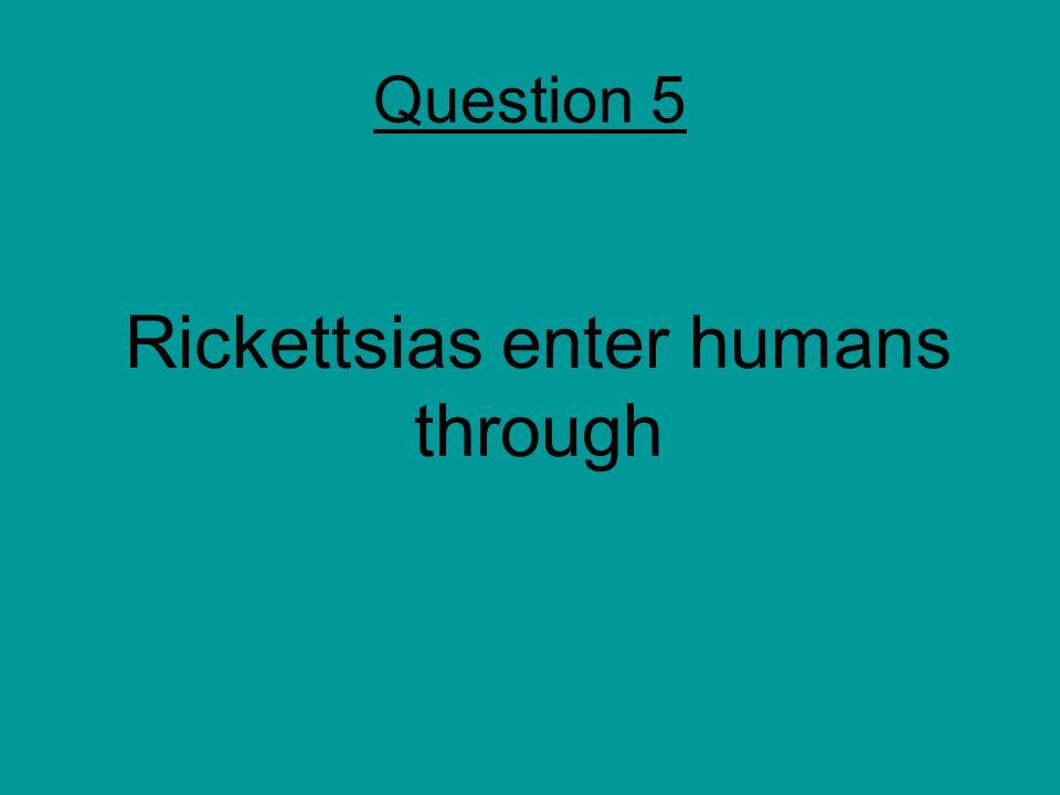 Rickettsias enter humans through Question 5