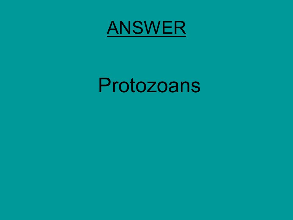 ANSWER Protozoans