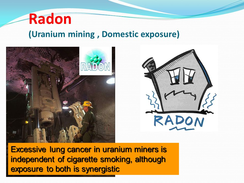 Radon (Uranium mining, Domestic exposure) Excessive lung cancer in uranium miners is independent of cigarette smoking, although exposure to both is synergistic