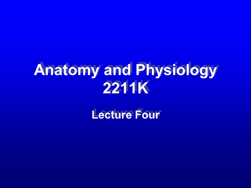 Anatomy and Physiology 2211K Lecture Four