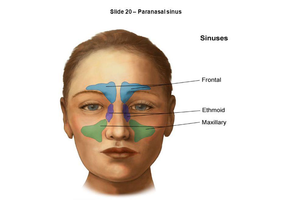 Slide 20 – Paranasal sinus