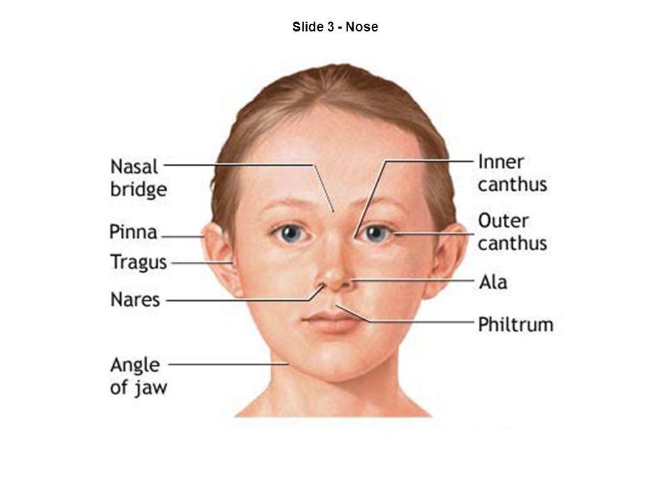 Slide 3 - Nose