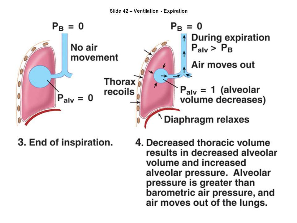 Slide 42 – Ventilation - Expiration