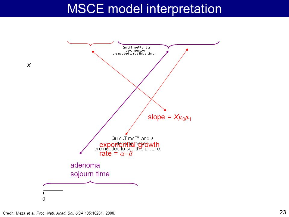 23 MSCE model interpretation slope = X  0  1 exponential growth rate =  –  adenoma sojourn time X 0 Credit: Meza et al.