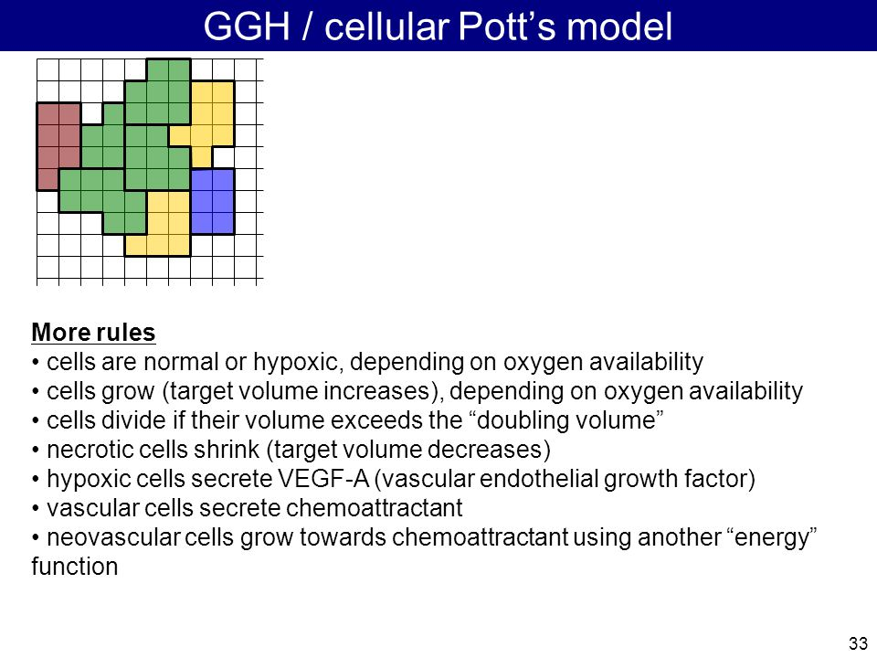 33 GGH / cellular Pott's model More rules cells are normal or hypoxic, depending on oxygen availability cells grow (target volume increases), depending on oxygen availability cells divide if their volume exceeds the doubling volume necrotic cells shrink (target volume decreases) hypoxic cells secrete VEGF-A (vascular endothelial growth factor) vascular cells secrete chemoattractant neovascular cells grow towards chemoattractant using another energy function