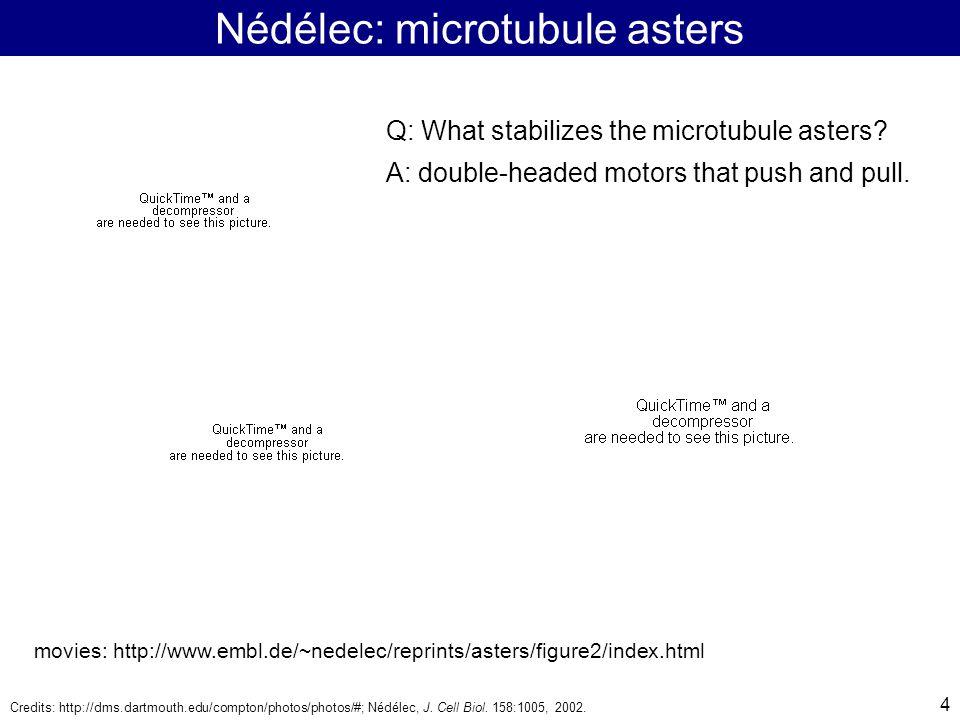 4 Nédélec: microtubule asters Credits: http://dms.dartmouth.edu/compton/photos/photos/#; Nédélec, J.