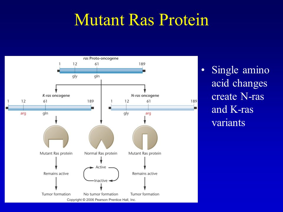 Mutant Ras Protein Single amino acid changes create N-ras and K-ras variants