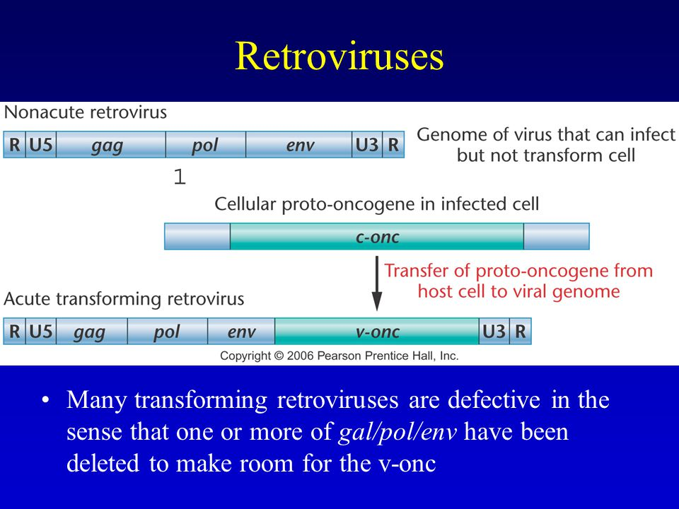 Retroviruses Many transforming retroviruses are defective in the sense that one or more of gal/pol/env have been deleted to make room for the v-onc