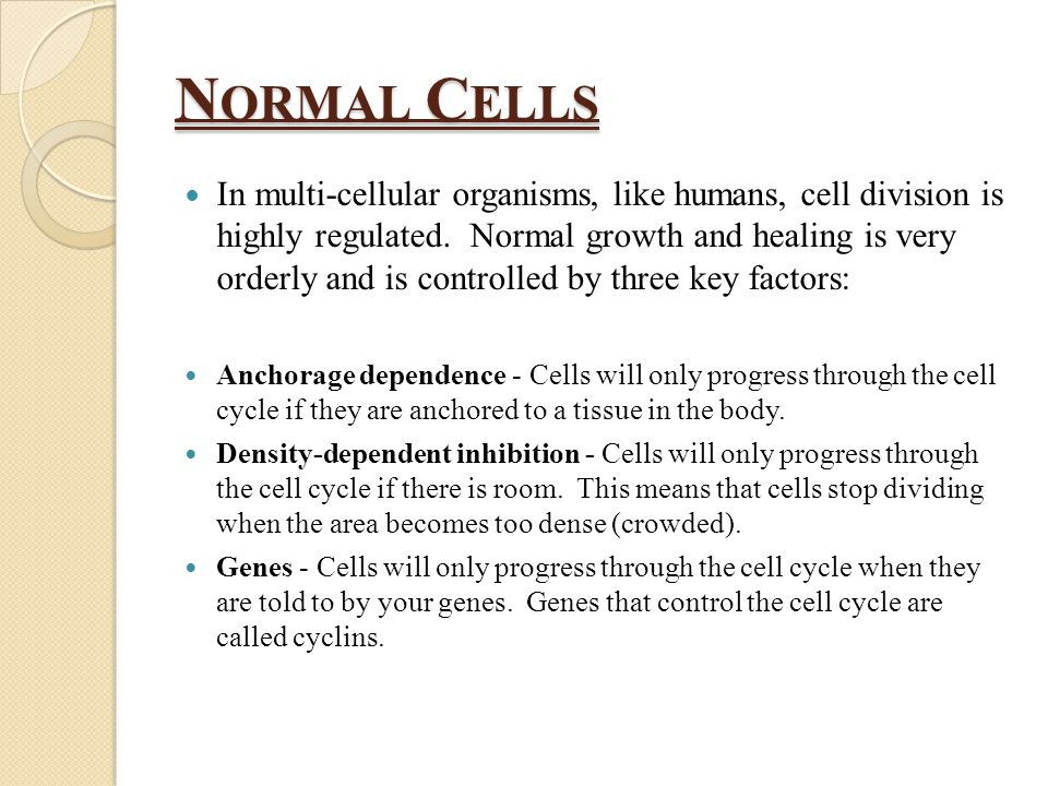 N ORMAL C ELLS In multi-cellular organisms, like humans, cell division is highly regulated.