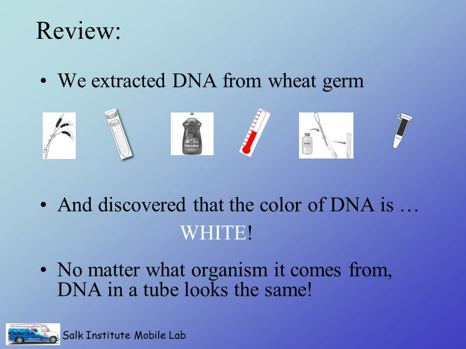 Salk Institute Mobile Lab Review: We extracted DNA from wheat germ And discovered that the color of DNA is … No matter what organism it comes from, DNA in a tube looks the same.