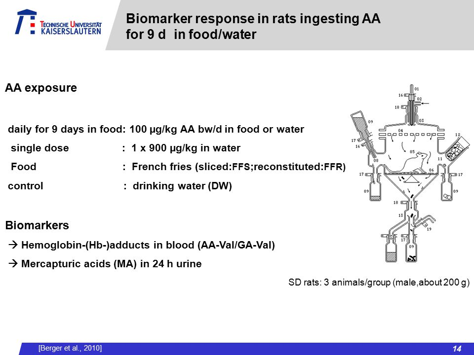 Biomarker response in rats ingesting AA for 9 d in food/water AA exposure daily for 9 days in food: 100 µg/kg AA bw/d in food or water single dose : 1