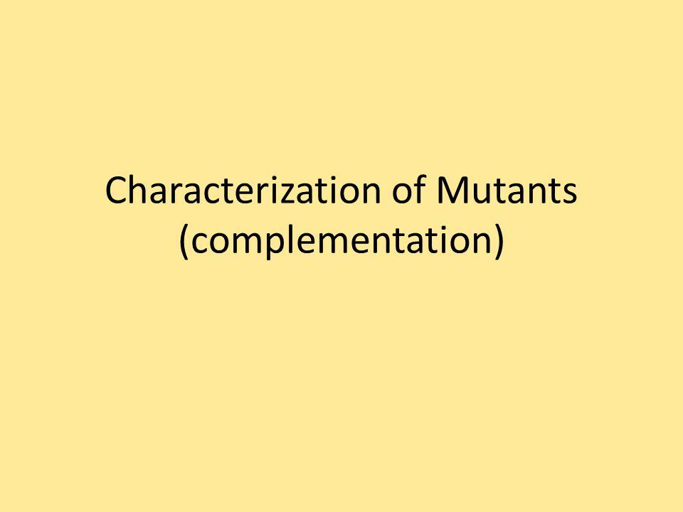 Characterization of Mutants (complementation)