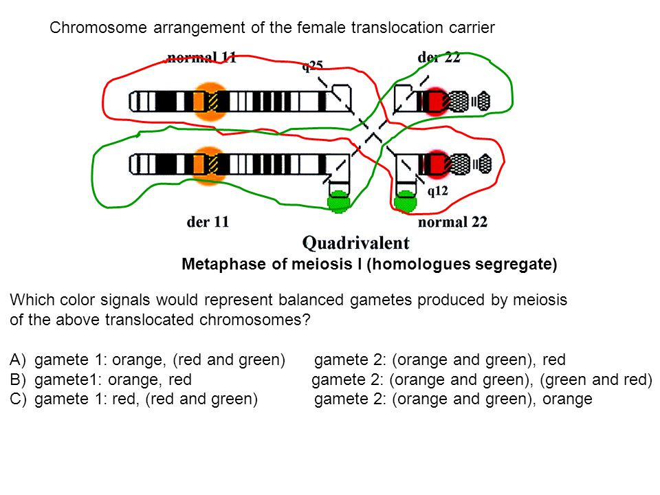 Which color signals would represent balanced gametes produced by meiosis of the above translocated chromosomes? A)gamete 1: orange, (red and green) ga