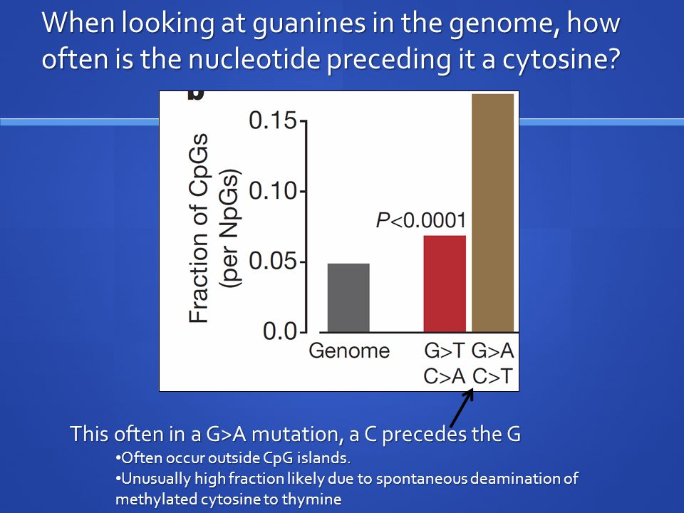 When looking at guanines in the genome, how often is the nucleotide preceding it a cytosine.