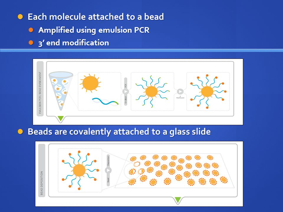 Each molecule attached to a bead Each molecule attached to a bead Amplified using emulsion PCR Amplified using emulsion PCR 3' end modification 3' end modification Beads are covalently attached to a glass slide Beads are covalently attached to a glass slide