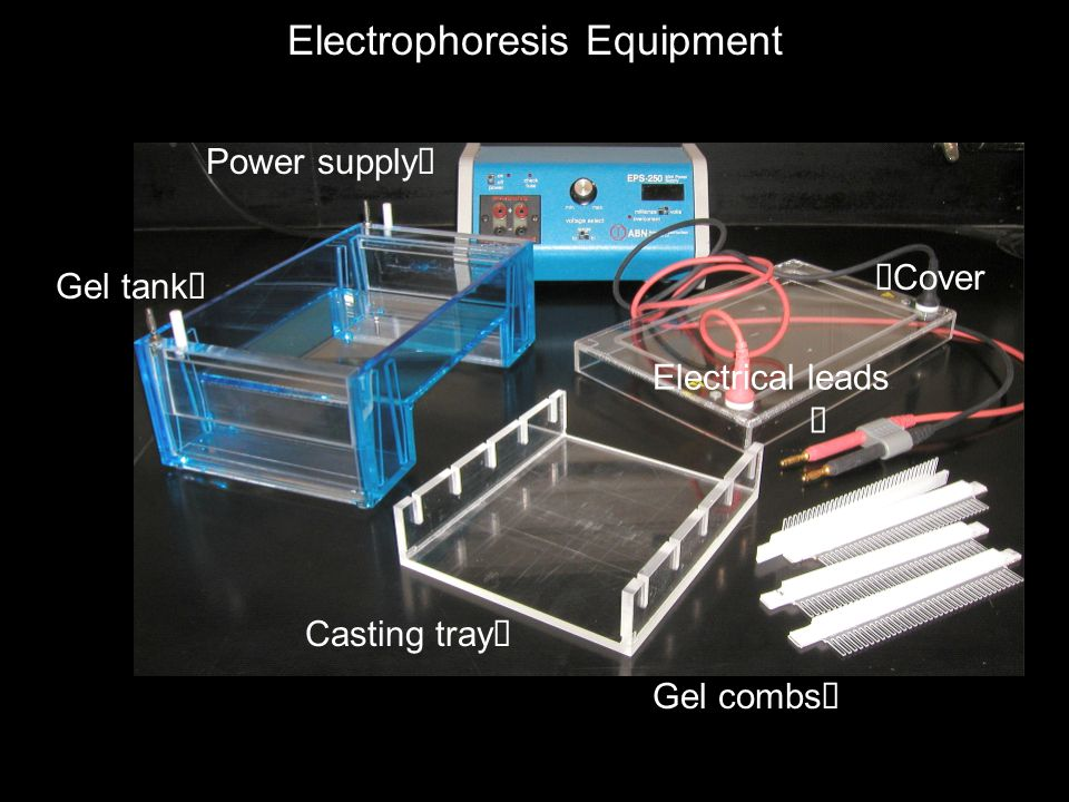 Casting tray  Gel combs  Power supply  Gel tank   Cover Electrical leads  Electrophoresis Equipment