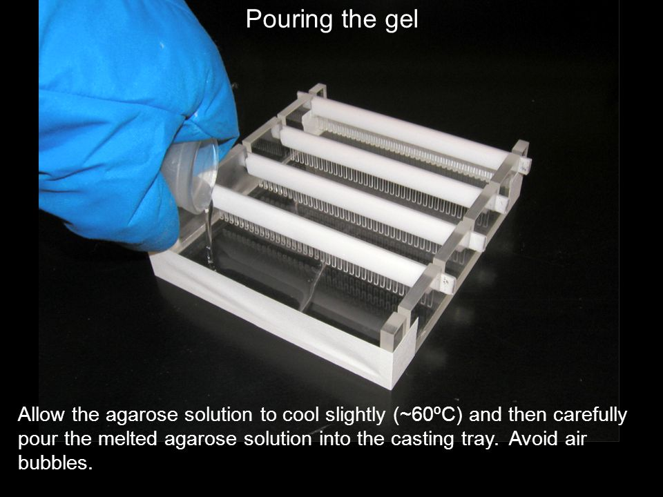 Allow the agarose solution to cool slightly (~60ºC) and then carefully pour the melted agarose solution into the casting tray. Avoid air bubbles. Pour