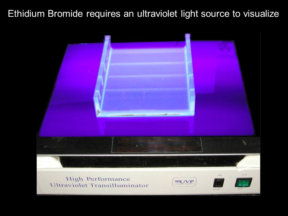 Ethidium Bromide requires an ultraviolet light source to visualize