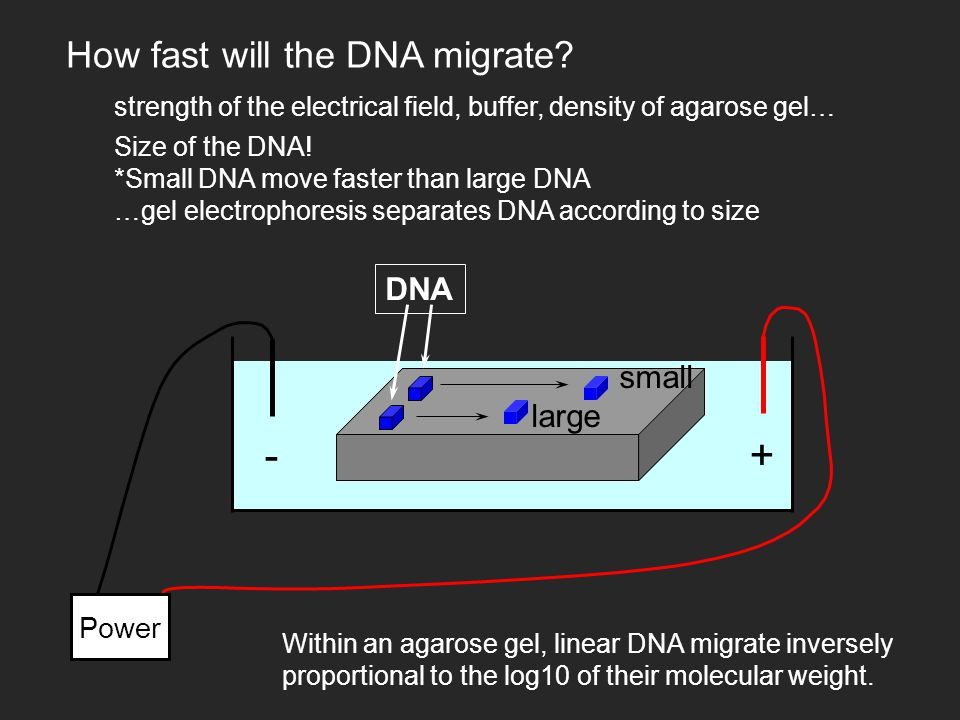 +- Power DNA How fast will the DNA migrate.
