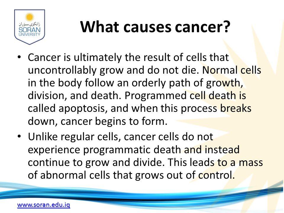 www.soran.edu.iq What causes cancer.