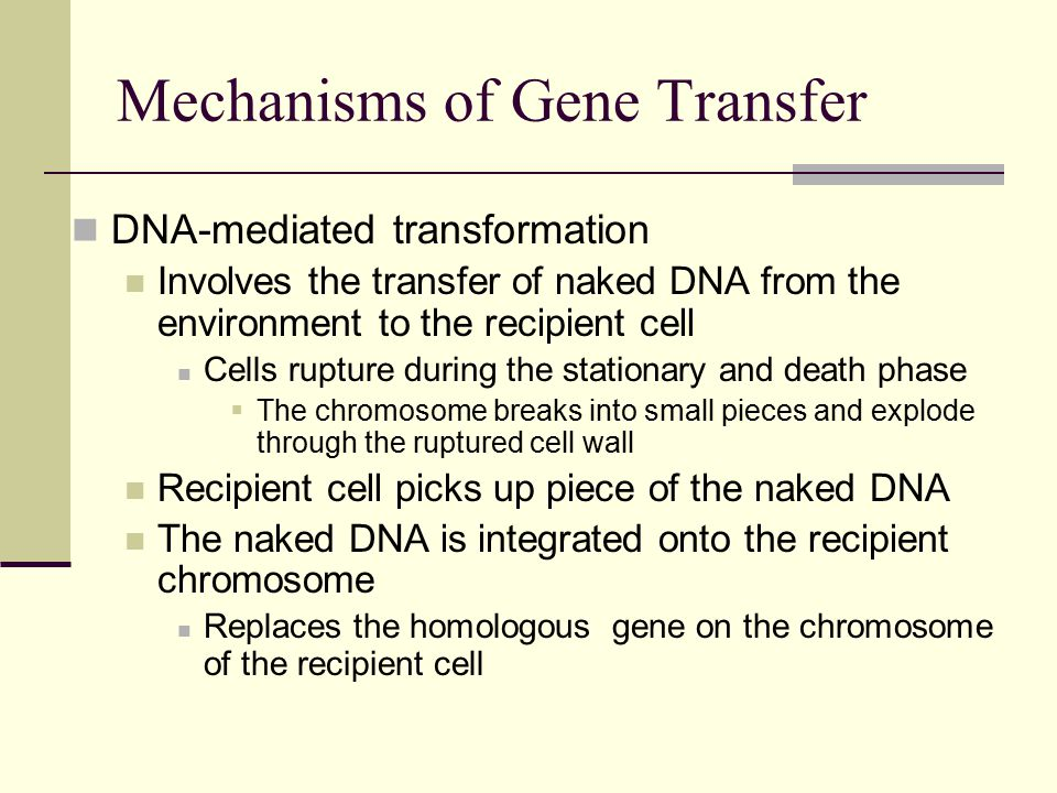 DNA-mediated transformation Involves the transfer of naked DNA from the environment to the recipient cell Cells rupture during the stationary and death phase  The chromosome breaks into small pieces and explode through the ruptured cell wall Recipient cell picks up piece of the naked DNA The naked DNA is integrated onto the recipient chromosome Replaces the homologous gene on the chromosome of the recipient cell Mechanisms of Gene Transfer