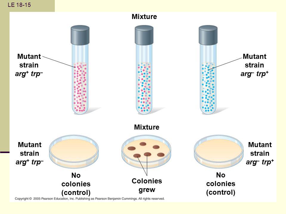 LE 18-15 Mutant strain arg + trp – Mutant strain arg + trp – Mixture No colonies (control) No colonies (control) Colonies grew Mutant strain arg – trp