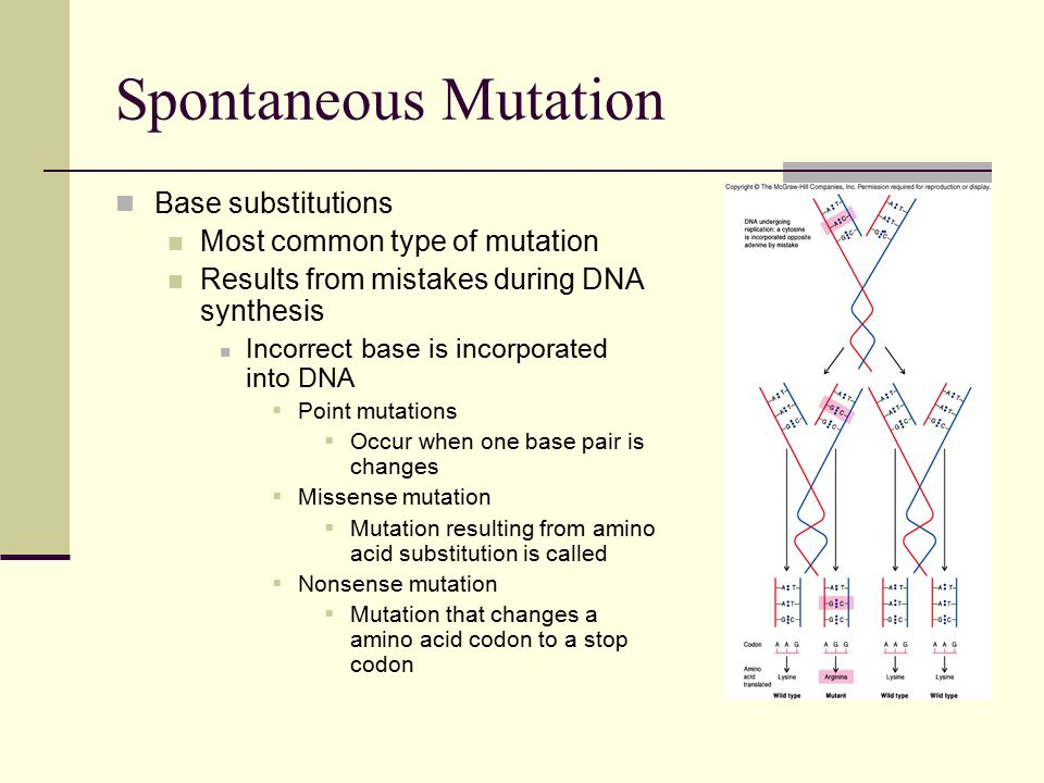 Base substitutions Most common type of mutation Results from mistakes during DNA synthesis Incorrect base is incorporated into DNA  Point mutations  Occur when one base pair is changes  Missense mutation  Mutation resulting from amino acid substitution is called  Nonsense mutation  Mutation that changes a amino acid codon to a stop codon