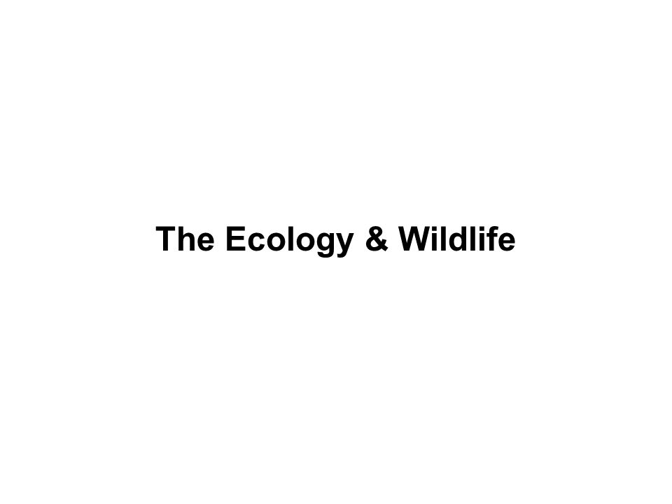 The Ecology & Wildlife