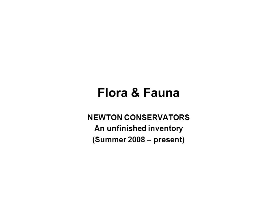 Flora & Fauna NEWTON CONSERVATORS An unfinished inventory (Summer 2008 – present)