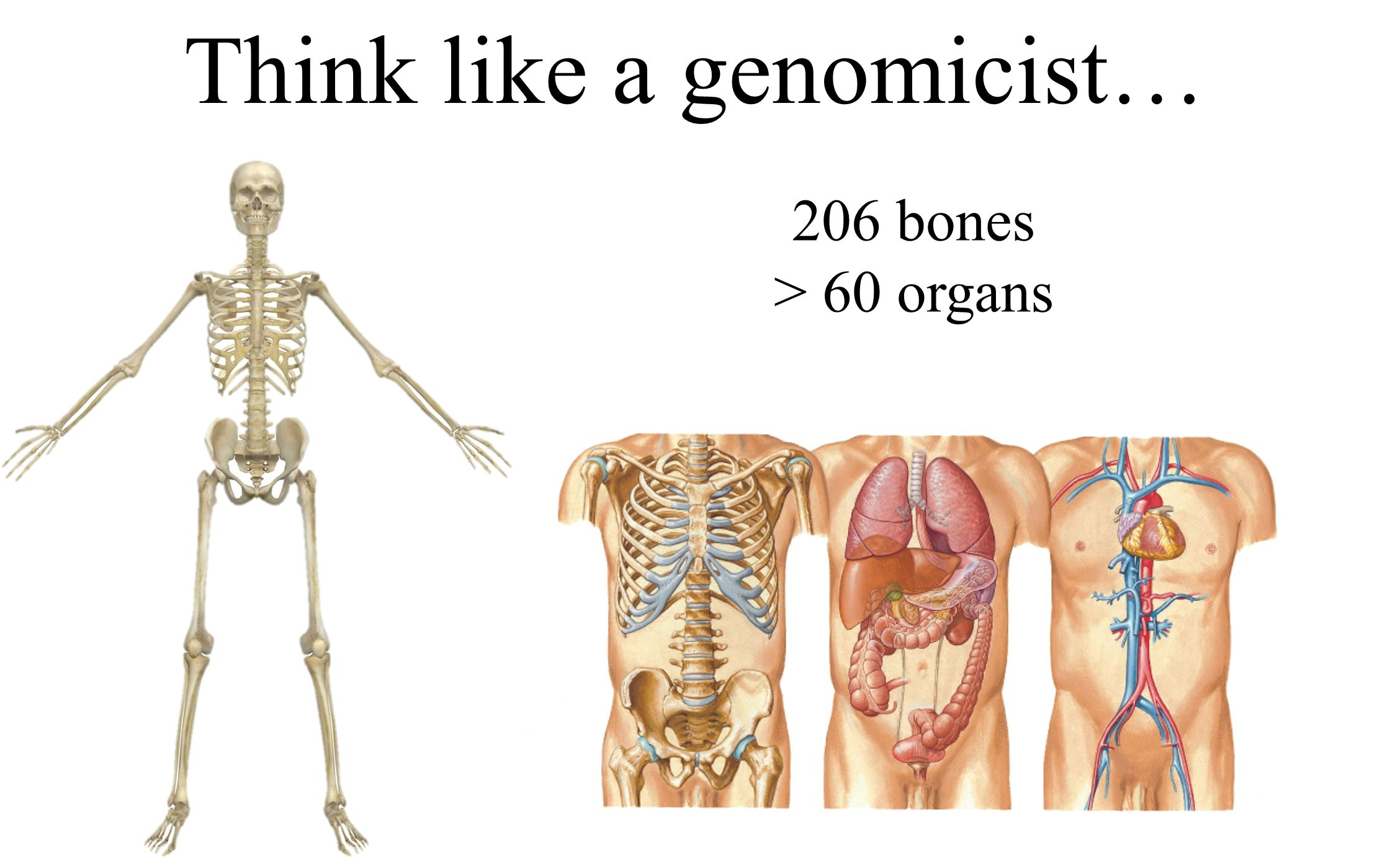 206 bones > 60 organs How do I remember them all