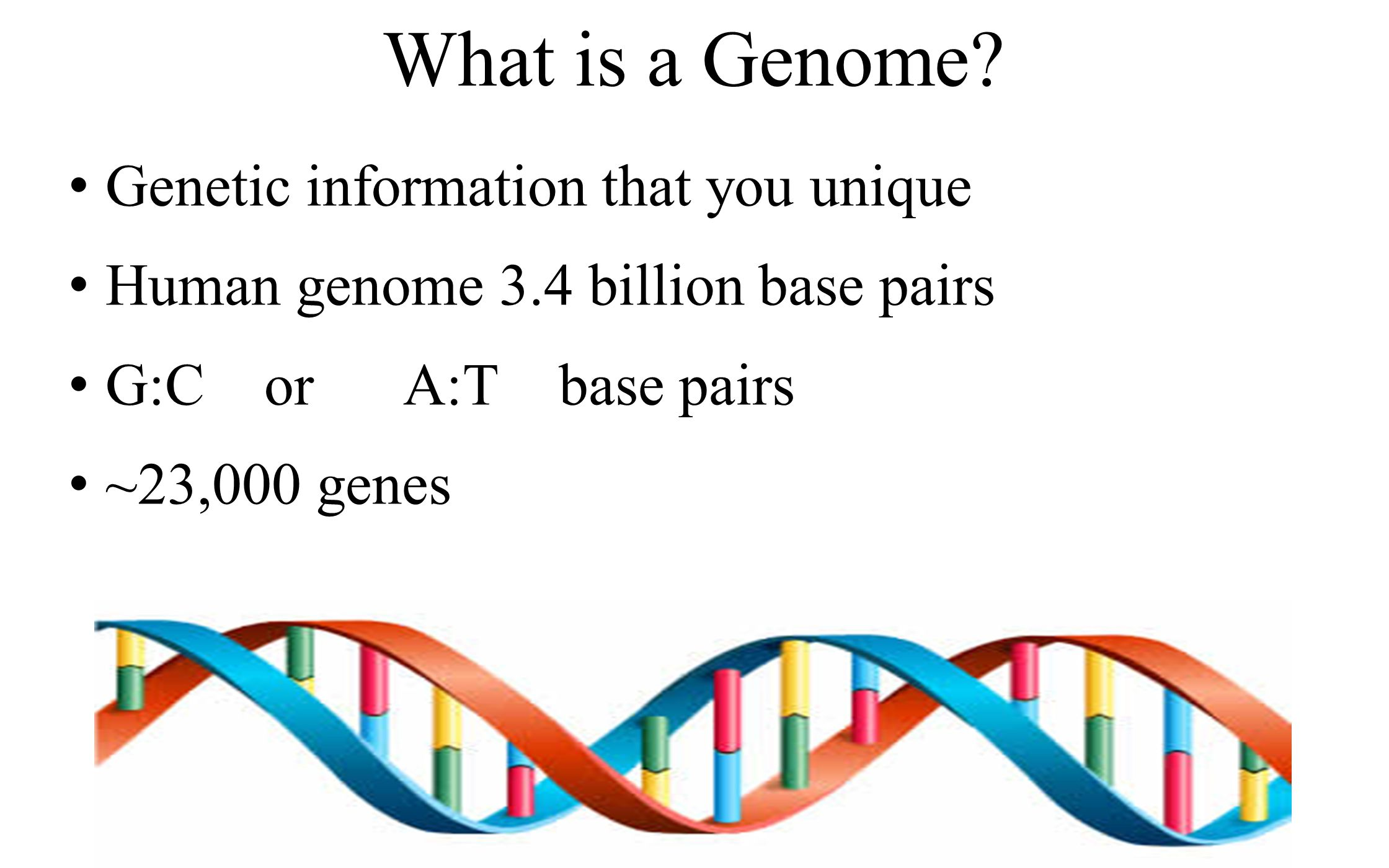 What is a Genome