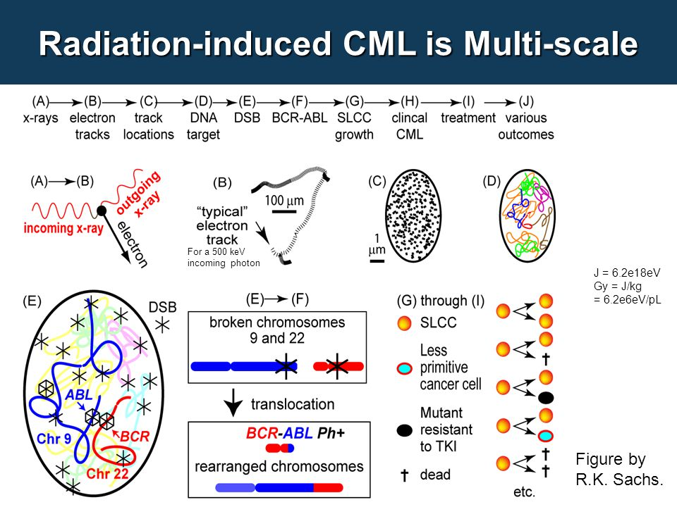 Radiation-induced CML is Multi-scale Figure by R.K.
