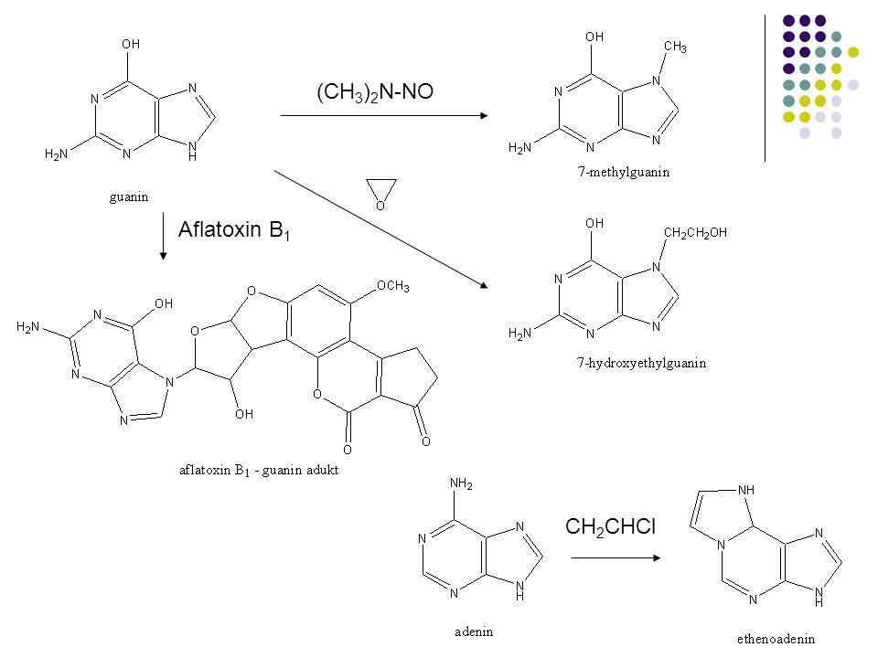 Aflatoxin B 1 (CH 3 ) 2 N-NO CH 2 CHCl
