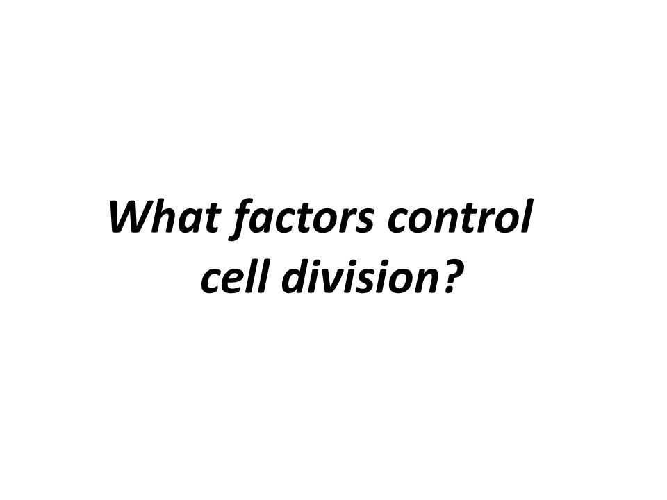 What factors control cell division