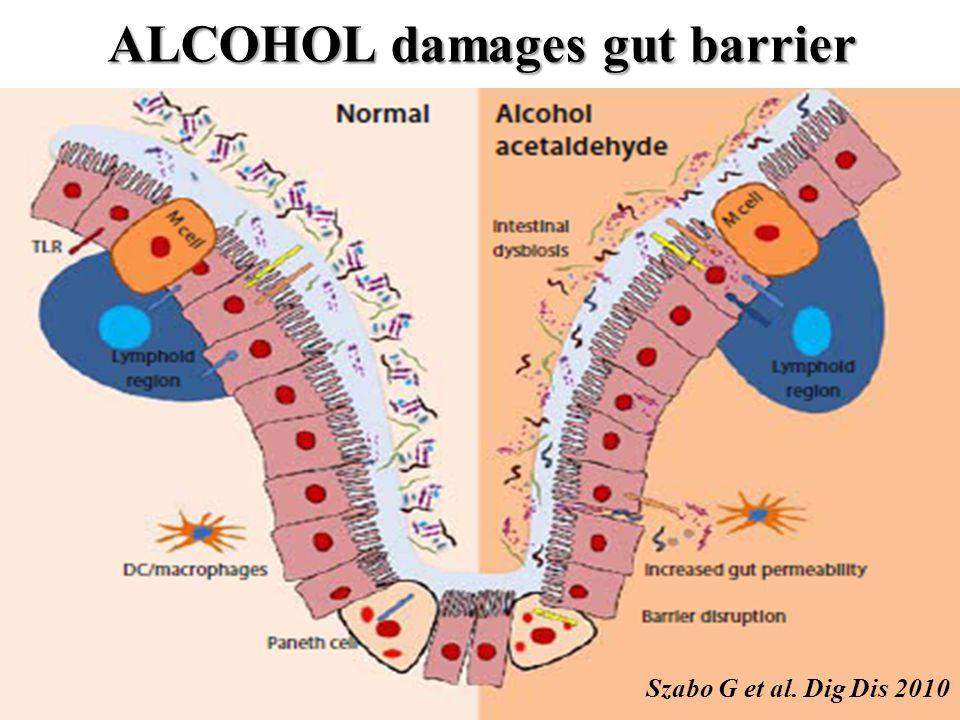 ALCOHOL damages gut barrier Szabo G et al. Dig Dis 2010
