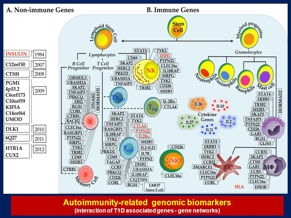 Autoimmunity-related genomic biomarkers (interaction of T1D associated genes - gene networks)