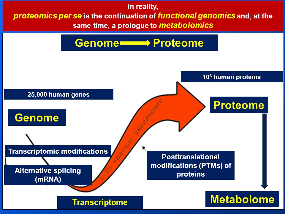 In reality, proteomics per se is the continuation of functional genomics and, at the same time, a prologue to metabolomics Genome Proteome Genome Proteome Transcriptome Metabolome 10 6 human proteins 25,000 human genes Posttranslational modifications (PTMs) of proteins Alternative splicing (mRNA) Transcriptomic modifications