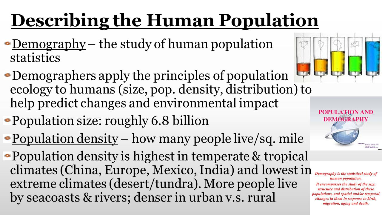 Describing the Human Population Demography – the study of human population statistics Demographers apply the principles of population ecology to human