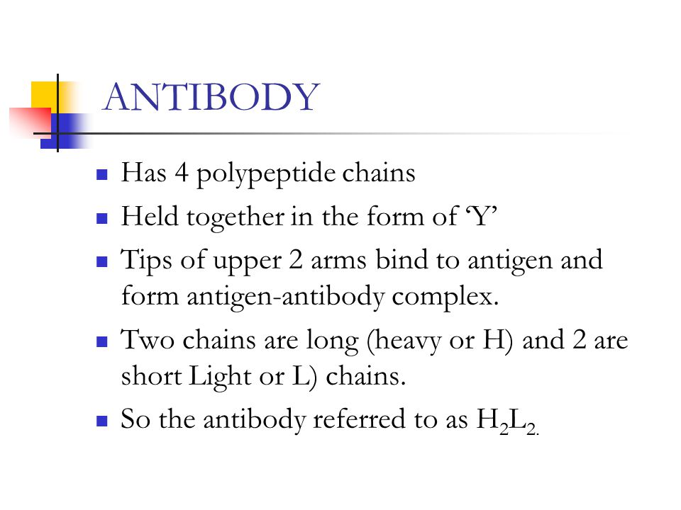 ANTIBODY Has 4 polypeptide chains Held together in the form of 'Y' Tips of upper 2 arms bind to antigen and form antigen-antibody complex. Two chains