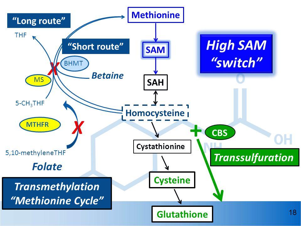 High SAM switch + X X THF 5-CH 3 THF MTHFR SAH Homocysteine Cystathionine Cysteine Glutathione Methionine SAM 5,10-methyleneTHF BHMT Betaine MS Transmethylation Methionine Cycle Short route Long route Folate Transsulfuration 18 CBS
