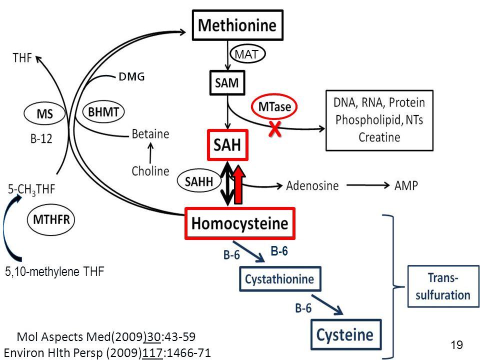 ACAM 6/10/2014 5,10-methylene THF B-6 X DMG Mol Aspects Med(2009)30:43-59 Environ Hlth Persp (2009)117:1466-71 MAT 19
